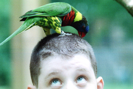 BringZoo_Parrot_Small2